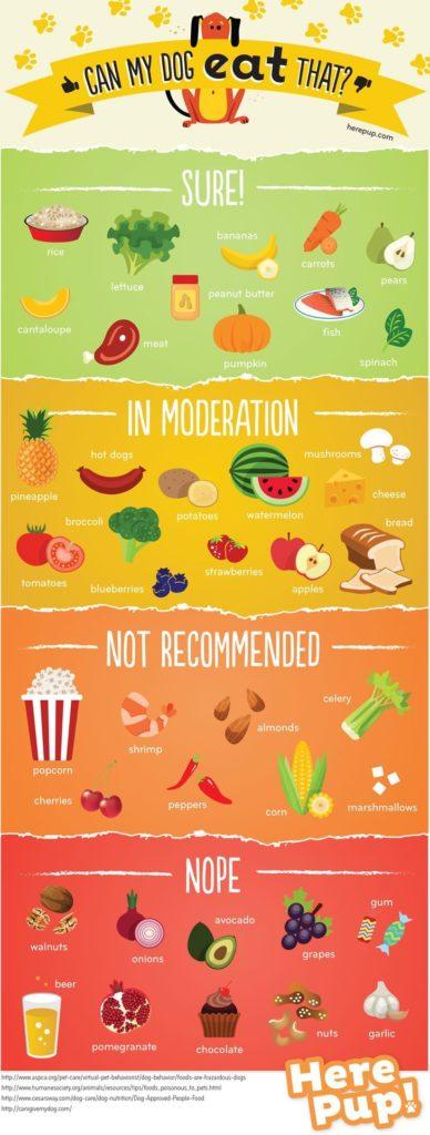 Alimente pe care câinii le pot sau NU mânca