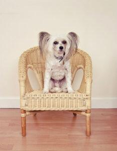 Look-ul unui câine din această rasă este de neegalat