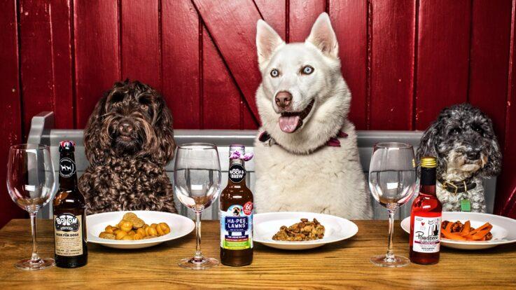 Ai un câine cu stomacul sensibil? Iată cum alegi cea mai bună hrană hipoalergenică! Cele mai bune 3 variante de mâncare