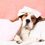 Temperatura la câini. Care este valoarea normală și cum îți dai seama dacă are febră sau nu