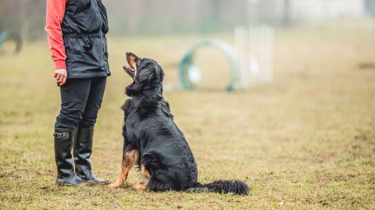 Rețete de mâncare pentru câini: cum să faci recompense pentru vremea caldă