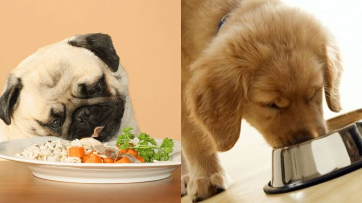 Rețete de mâncare pentru câini: pui cu legume și orez
