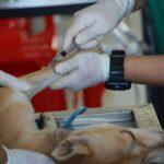 Care sunt vaccinurile pe care trebuie să le faci neapărat la câini în România. Schema de vaccinare
