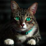 Care sunt vaccinurile pe care trebuie să le faci neapărat la pisici în România. Schema de vaccinare
